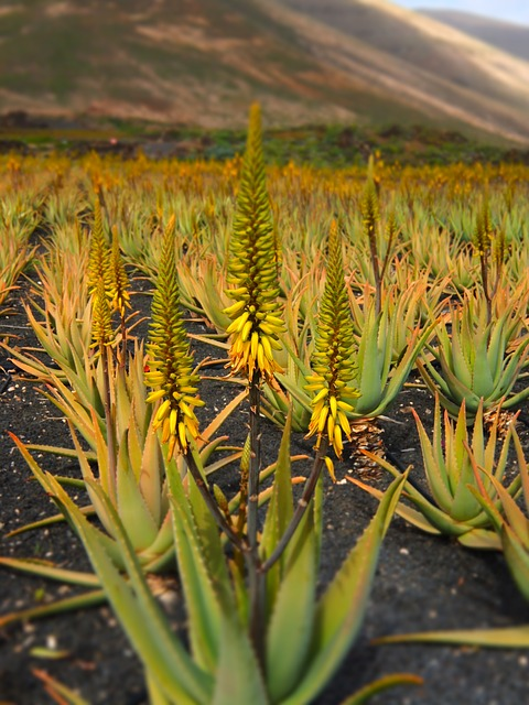 Aloe Vera Gel Elysius Naturkosmetik